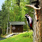 Сайт гостинично-развлекательного комплекса в Финляндии Тiirinniemen Ranta Oy